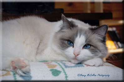 Sara: Blue BiColor Photo by Nancy McCallum